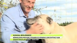 getlinkyoutube.com-SADIK DOSTLAR/BURSA-KARACABEY/11.BÖLÜM