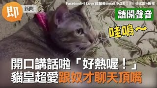 getlinkyoutube.com-開口講話啦「好熱喔!」 貓皇超愛跟貓奴聊天頂嘴