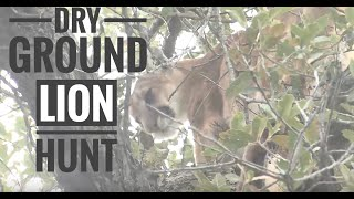getlinkyoutube.com-Arizona dry ground lion hunt with Seven Anchor