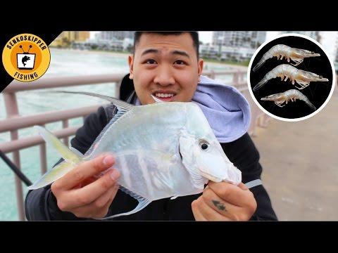 Pier Fishing tips for Beginners: Rigging Live Shrimp!