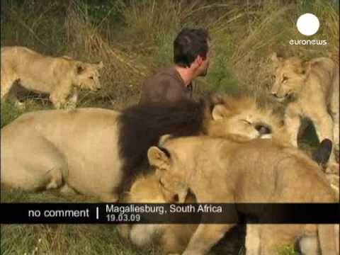Hugs with Lions-No comment