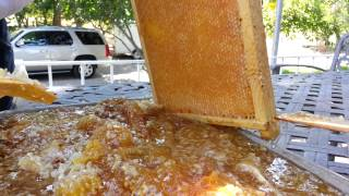 Harvest honey from beehive cheap easy way