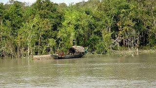 getlinkyoutube.com-Sundarban Tour Part 2 Sundarban Bangladesh