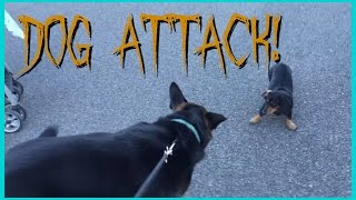 getlinkyoutube.com-DOG ATTACK!! 😝 | STAYING UP ALL NIGHT 😴