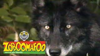 Zoboomafoo 111 - Fierce Creatures (Full Episode)