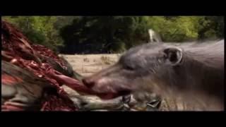 getlinkyoutube.com-Prehistoryczne Bestie Niedźwiedź Krótkopyski