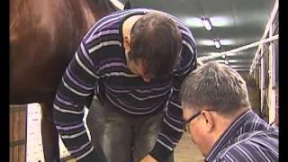 Проверено на себе: как коня подковать?