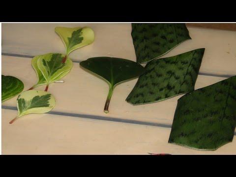Curso Como Produzir Plantas Ornamentais - Métodos de Propagação - Cursos CPT