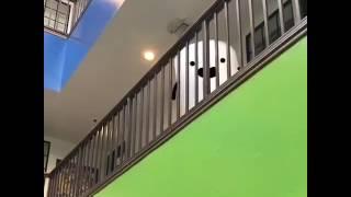getlinkyoutube.com-Shypuff and Bubblewrap - Must Watch Cute Animation