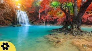 Healing Music, Relaxation Music, Chakra, Relaxing Music for Stress Relief, ✿2998C