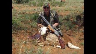 getlinkyoutube.com-Airgun Hunting south africa. The 4 Horn Damara Sheep with Sumatra