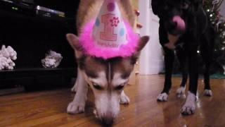 getlinkyoutube.com-Laika's 1st Birthday Party!