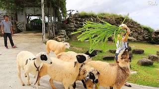 สวนละไม | ระยอง | HD | SBL บันทึกประเทศไทย