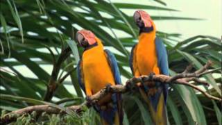 getlinkyoutube.com-Macaw Breeders Podcast #12