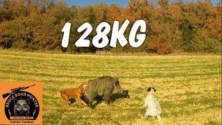 getlinkyoutube.com-Gros sanglier : 128KG / BIG WILD BOAR