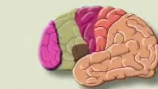 getlinkyoutube.com-العقل البشري