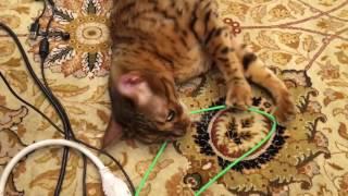 getlinkyoutube.com-Beavis chewing wires