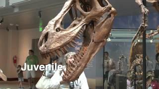 getlinkyoutube.com-Natural History Museum of Los Angeles