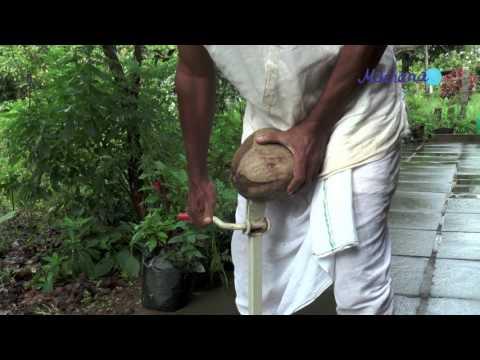 Coconut Husk Peeler