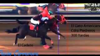 getlinkyoutube.com-Carrera de El Cadete vs El Gato Americano 5 30 2015