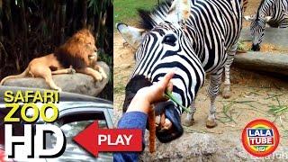 getlinkyoutube.com-Taman Safari Indonesia part 1 - Safari ZOO ( with Complete animal sound )