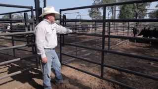 Priefert Cattle Working System Demo