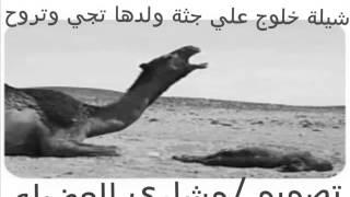 getlinkyoutube.com-شيلة خلوج علي جثة ولدها تجي وتروح