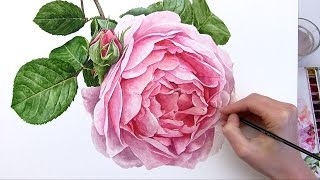 getlinkyoutube.com-How to paint a realistic rose flower in watercolour