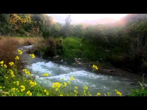 Relaxing Nature Scenes - Relaxing Nature Sounds w/o Music - Relaxation Meditation Sleep Video