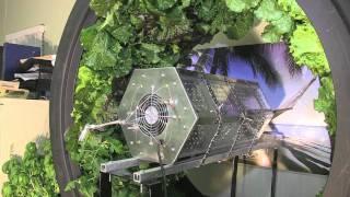 getlinkyoutube.com-6 Week Volksgarden Test with Hydro Grow's Vertical Light