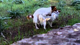 getlinkyoutube.com-Incredible Gay Dogs!!!
