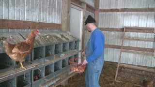 getlinkyoutube.com-Gathering Eggs at Pecatonica Valley Farm