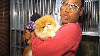 getlinkyoutube.com-Puluhan Kucing Peliharaan Uya Kuya - Intens 10 Januari 2014