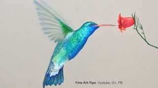 getlinkyoutube.com-How to Draw a Hummingbird - Drawing With Color Pencils