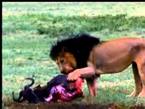 Domingão Aventura - Animais selvagens - 03 10 10 - Parte 1