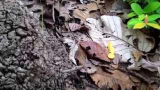getlinkyoutube.com-สำรวจและเก็บเห็ดป่า Mushroom from forest