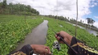 getlinkyoutube.com-ไปตกปลาช่อนแม่น้ำ กันเถอะ