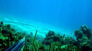 getlinkyoutube.com-Top 10 shots Spearfishing