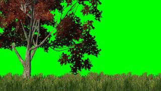 getlinkyoutube.com-meadow with red tree in the wind -  green screen effects
