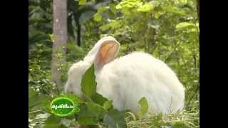 getlinkyoutube.com-Dr. Migdad, Ashiyana Rabbit farm, Malappuram : Nehru Award Winner