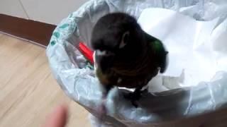 getlinkyoutube.com-앵무새에게 보리를 주면 겪게 되는 일