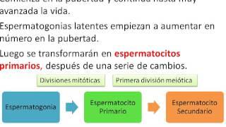 getlinkyoutube.com-Gametogénesis - Piloto Clases de Embriología