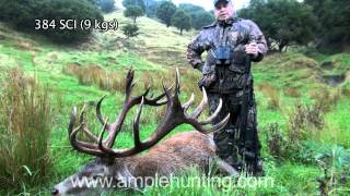 Hunting New Zealand - Ample Hunting Red Stag