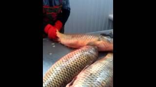 getlinkyoutube.com-Как чистят рыбу в Атырау