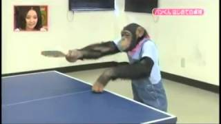 getlinkyoutube.com-ลิงตีปิงปองย่างฮา