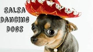 getlinkyoutube.com-Salsa Dancing Dogs