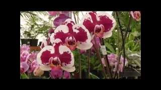 getlinkyoutube.com-Amazing Orchids Tour - 20 Incredible Varieties in a Winter Greenhouse!!