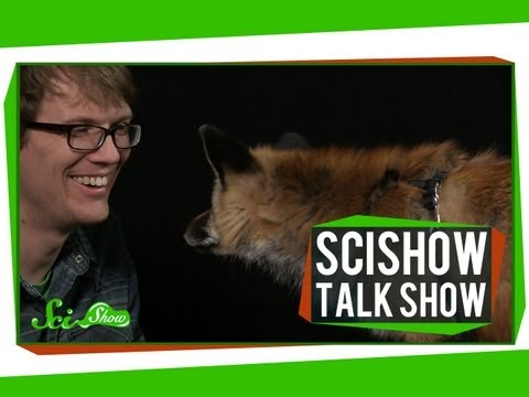 Human-Powered Helicopters and a Red Fox: SciShow Talk Show #8