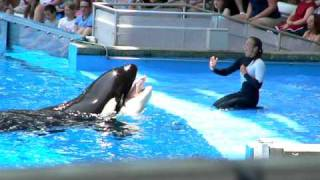 getlinkyoutube.com-Dawn Brancheau performing at Seaworld Orlando with Killer Whale (Orca)