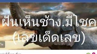 """getlinkyoutube.com-ฝันเห็นช้าง """"ฝันว่าได้ขี่ช้าง """" ฝันว่าช้างเหยียบ เลขเด็ดทำนายฝัน"""